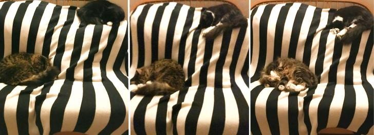 この時なんか、定位置でほとんど同時に同じ格好、同じ向きで寝ていてビックリ